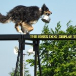 The Essex Dog Display Team